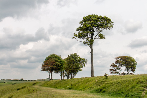 Isolated trees at Oliver's Castle