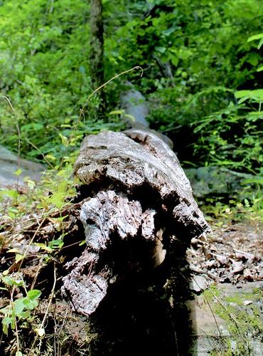 Log fallen on trail, Noccalula Falls, Alabama