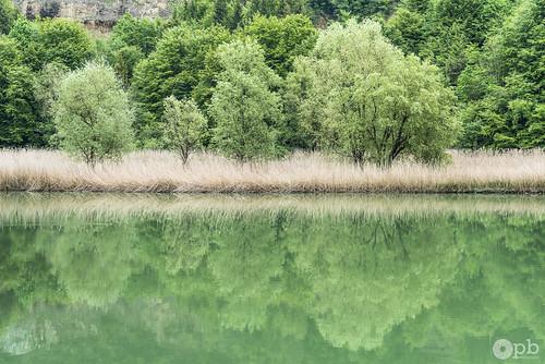 Reflets verdoyants