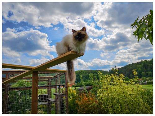 Kila auf dem neuen Catwalk
