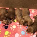 Jesse's 5 girls and 4 boys !!