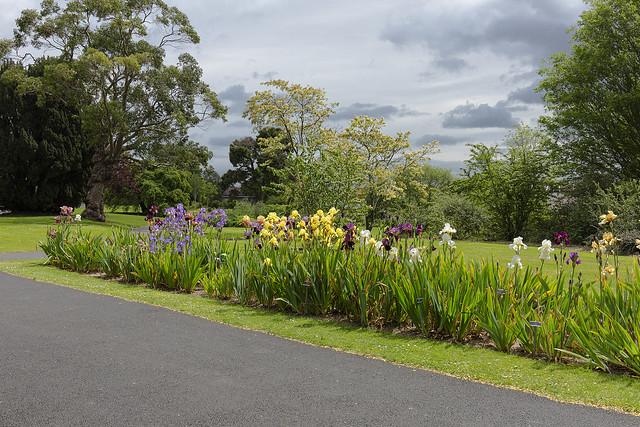 Iris display Botanic gardens
