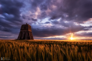Wheatfield and the sun
