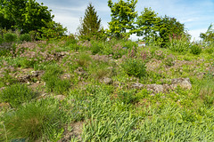 Carinthia Botanical Garden 33