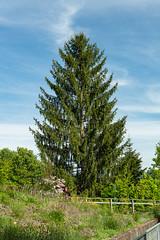 Carinthia Botanical Garden 32