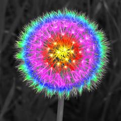 Rainbow Dandelion Puff Bright Semi