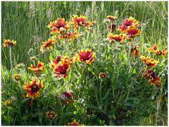 Fleurs sauvages - Photo of Saint-Généroux