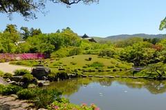 Isui-en, Garden -1 (May 2019)