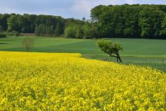 En jaune et vert