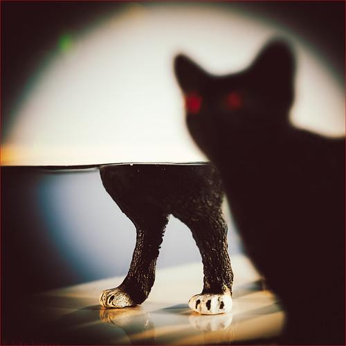 The Mirror Cat'd