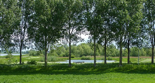 Floodplain near Opheusden