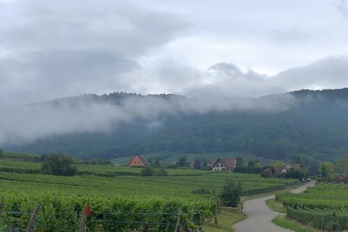 Territoir du vins d'Alsace