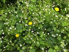 147/365: Happy Wildflowers