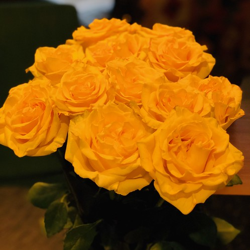 Yellow birthday roses!