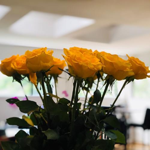 Yellow birthday roses!