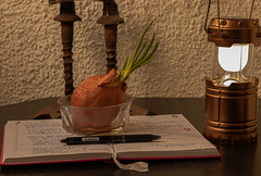 Notebook with onion