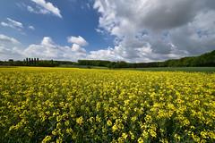 Le jaune est mis - Photo of Oberhoffen-lès-Wissembourg