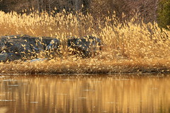 The  bed of reeds