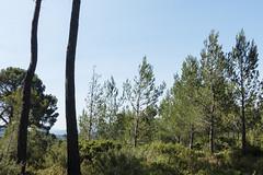 Park Roques Hautes Vegetation - Photo of Châteauneuf-le-Rouge