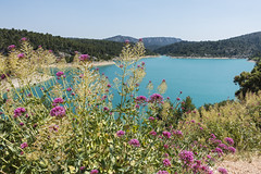 Red Valerian at Lake Bimont - Photo of Châteauneuf-le-Rouge