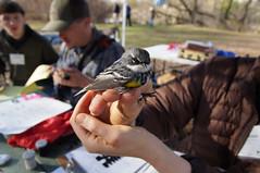 Bird Banding-10