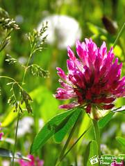 Flowers - Photo of Champtercier