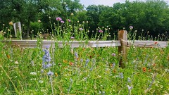 Wildflower Walk Texas