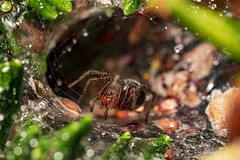 Little Spider - Photo of Courry