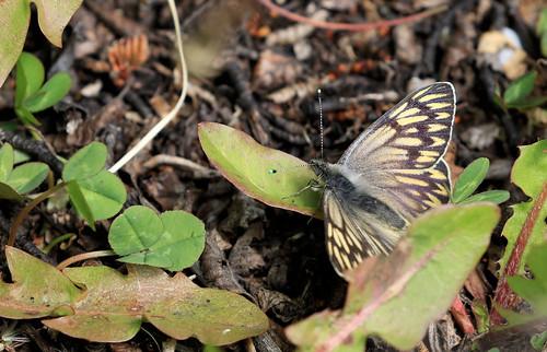 Papillon sp19 - Ushuaia_20171201_47