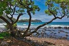 Koki Beach Area