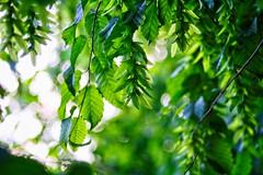 Green Nature Bokeh | 29. Mai 2019 | Tarbek - Schleswig-Holstein - Deutschland
