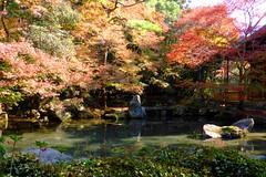 Renge-ji, Garden -3 (November 2015)