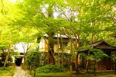 Renge-ji, Precincts -2 (October 2017)
