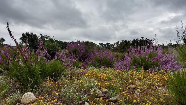 Yet more wildflowers