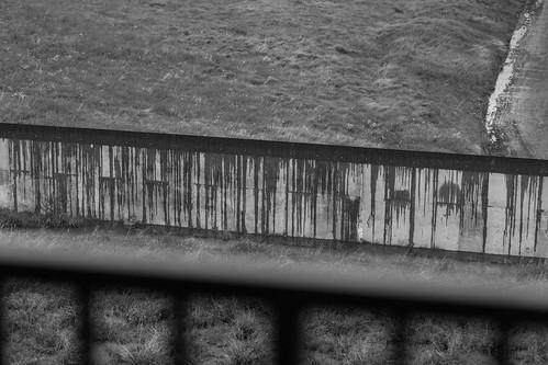 Rain Soaked Fence
