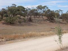 Dirt Road View