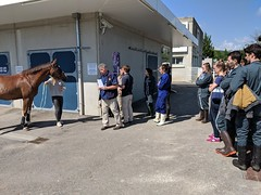 Horse is ready with Tendiboots and LL - Photo of Dommartin