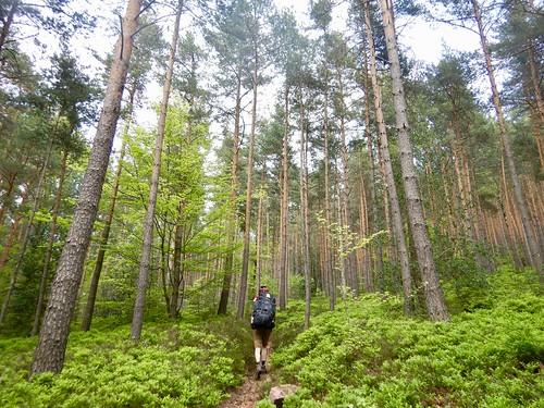 Omhoog, door de oerbossen