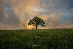 """Image by the_lowe_life (jwlowe) and image name """"Solitude"""" photo  about With storms passing thru Versailles an hour or so before sunset I had high hopes for good conditions. Unfortunately some low level clouds ruined any chance of afterglow, but I was able to catch good light 30 minutes before."""