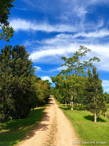 Boorganna Nature Reserve, Comboyne Plateau, Mid North Coast, NSW