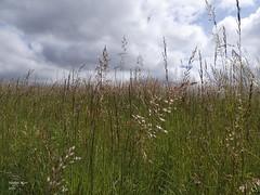 Nature - Photo of Le Douhet
