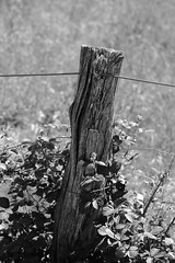 Lutin fence