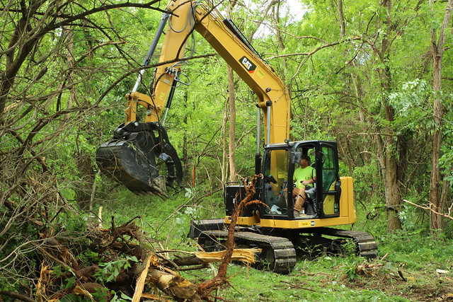 Clearing woods