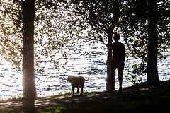 walking a dog in the evening