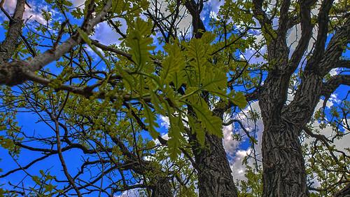 Parrish Oak Savanna State Natural Area