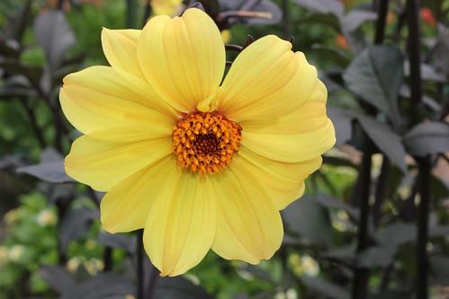 Botanic Gardens 0101 2014 050