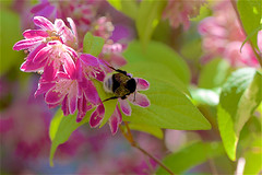 Ecosystème et biodiversité dans mon jardin - Photo of Daignac