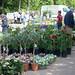 31-05-2019 Bloemen en Tuinmarkt