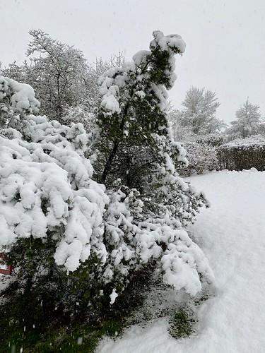 Schnee in Affoltern