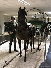 one horsepower - Photo of Bietlenheim